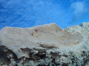 Wurzel, Fossilien, Kalkstein, Hillaries
