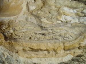 root, fossiileja, kalkkikivi, seawall, kiviä, rock