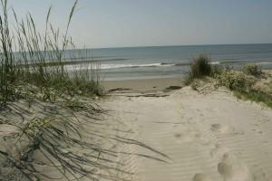beau, océan, entrée, dunes