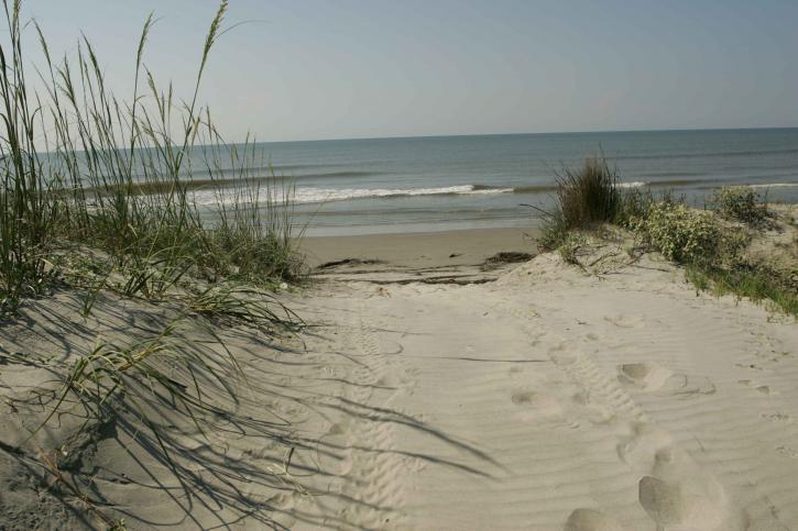 prachtige, Oceaan, ingang, duinen