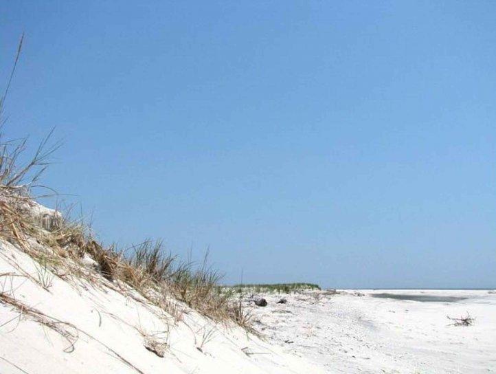 up-close, dune, beach