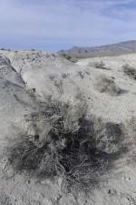 desert, vegetation, plants, sand