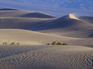 deserts, sand, dunes, tracks