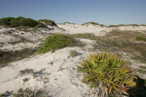 vierges, dunes