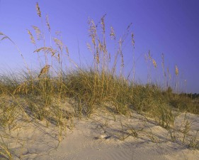 sable, dune, herbe