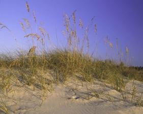 sabbia, dune, erba