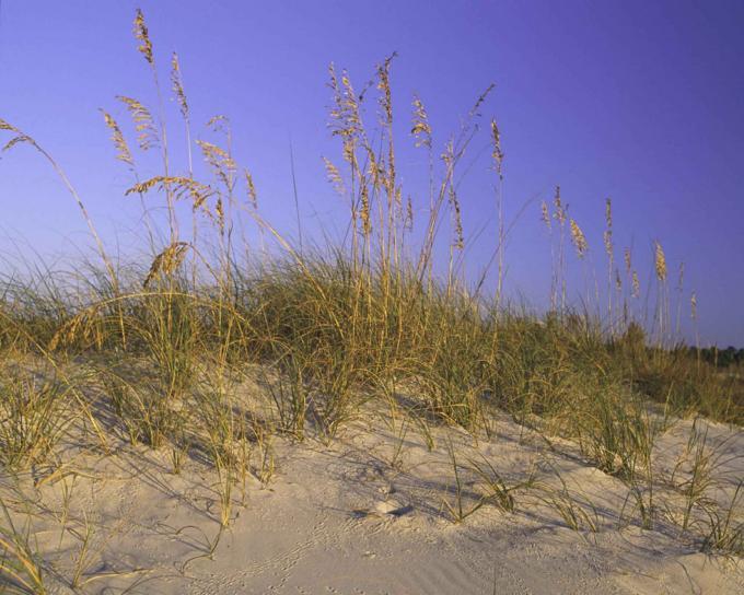пясък, дюни, трева