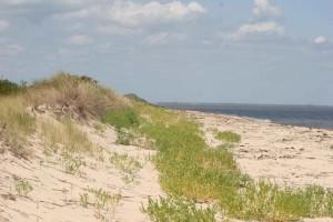 sable, dunes, plage, premier, crochet, désert, refuge