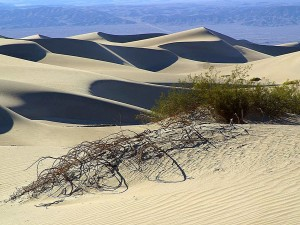 пясък, дюните, пустинята