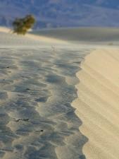 dunes de sable, les déserts, le sable, le vent souffle