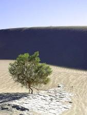 sable, dunes, désert, jour