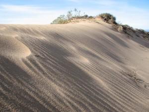 scénique, paradis, plage, sable, dune