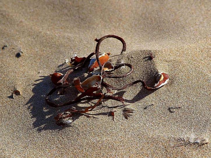 zeewier, zand, stranden