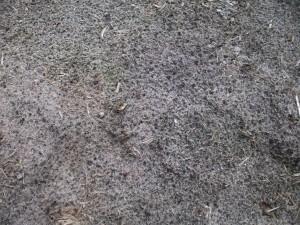 arena mojada