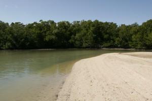 beach, sand, dune, water, line, mangrove, trees