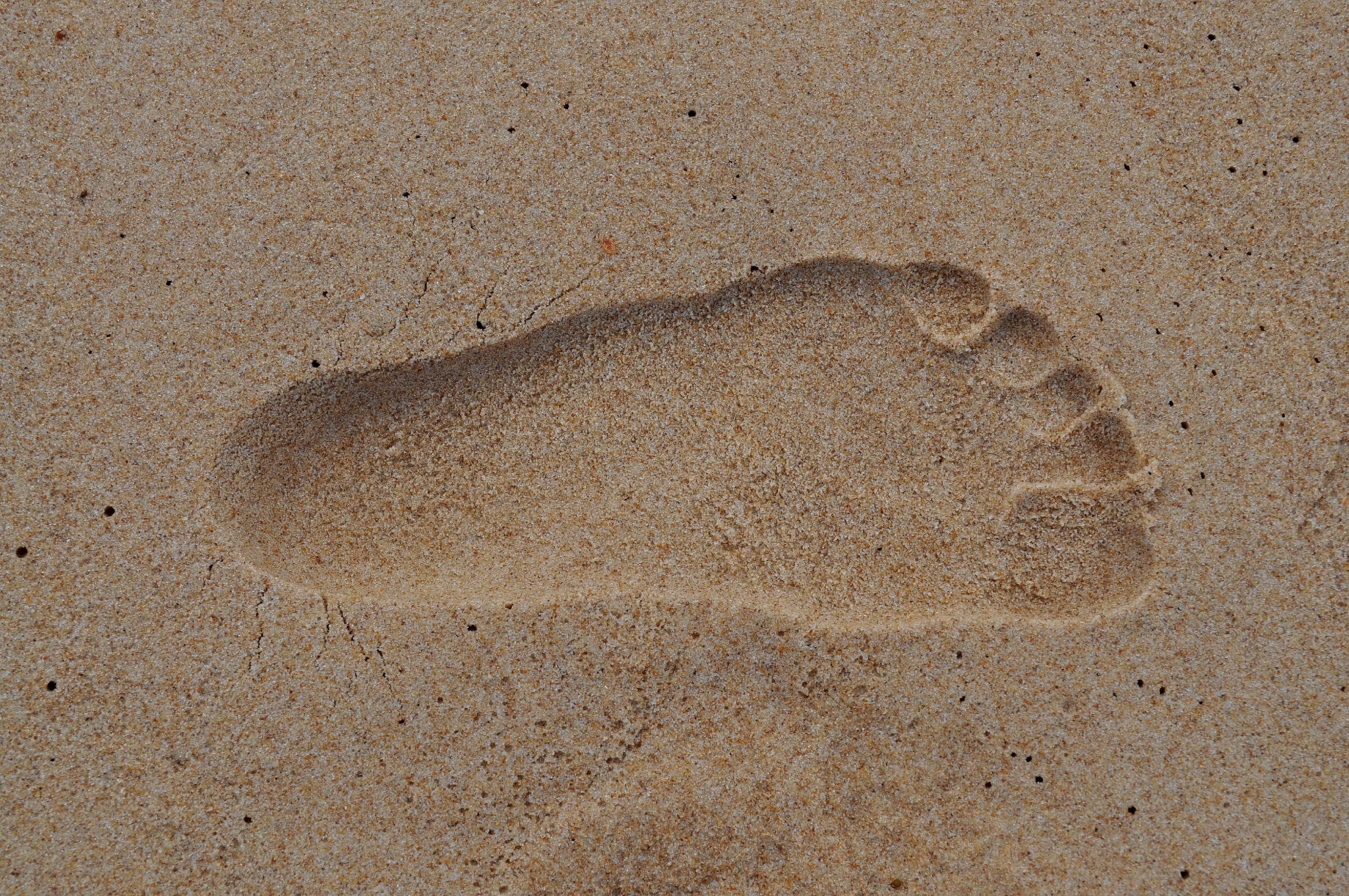 Free photograph; footprint, wet, sand