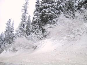 hillside, pine, trees, covered, snow
