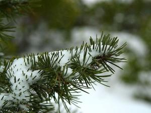 หิมะ Byce แคนยอน