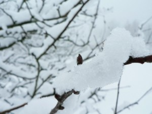 neige, branche, glace