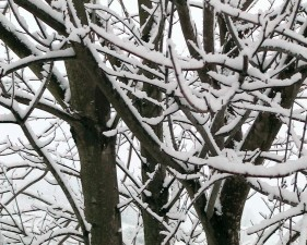 snow, covered, branches