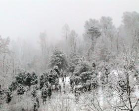 neige, couvert, terrain en pente, petit, conifères