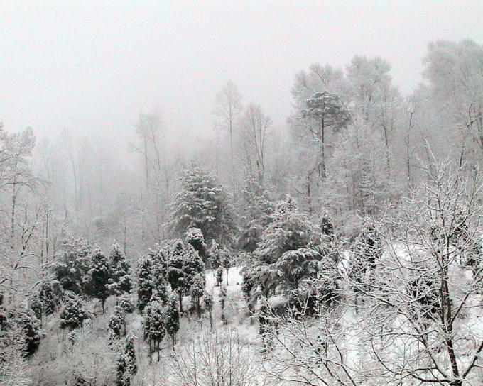 snow, covered, hillside, small, evergreens
