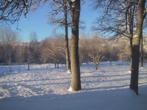 snow, trees, field