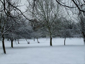 snow, scene