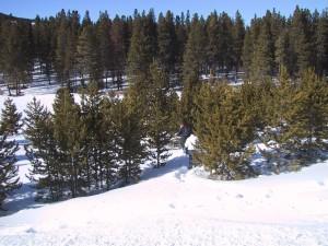 racchette da neve, alberi