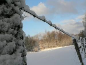 nevoso, filo spinato, recinzione