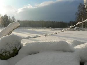 sunny, snowy, fields