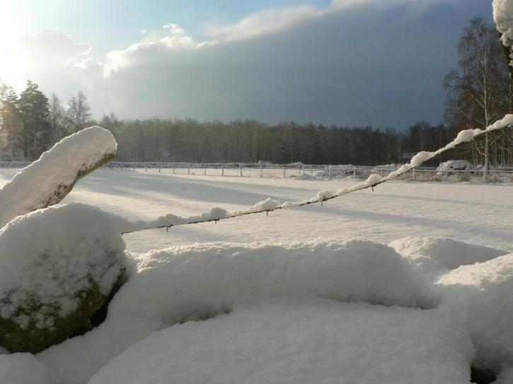 ensolarado, nevados, campos