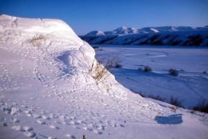 tracks, snow