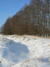 eau, ruisseau, caché, de la neige