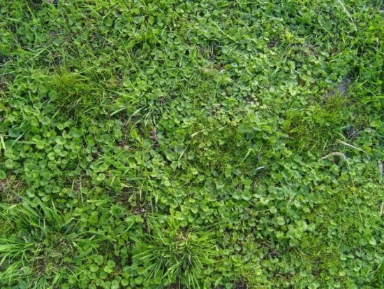 green, young, spring, grass
