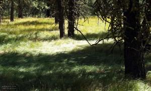 spring, grass, mountain
