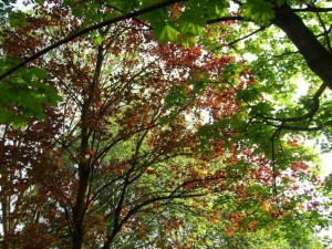 printemps, arbres, fleurs