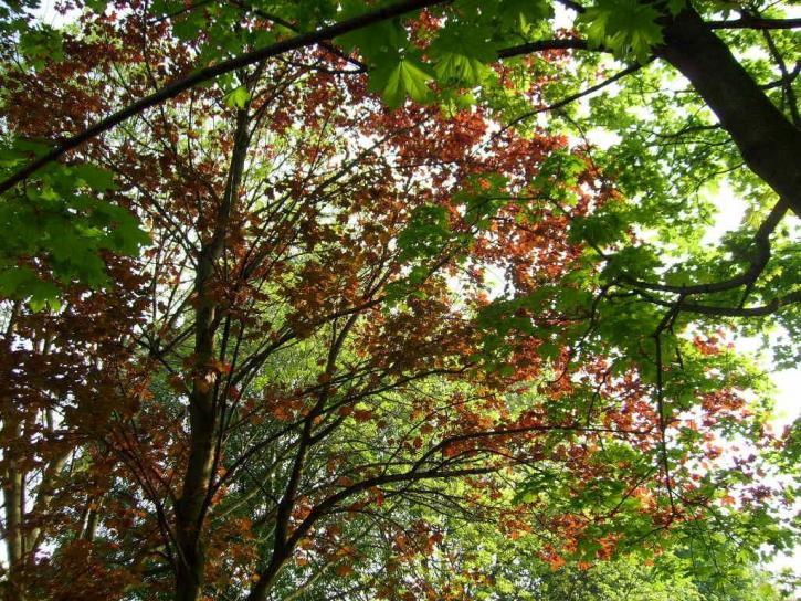 Image libre printemps arbres fleurs - Arbre fleur mauve printemps ...