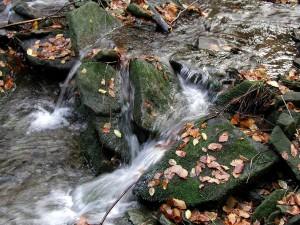 stream, spring