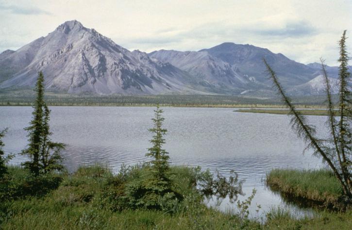 Arctique, lac, l'été