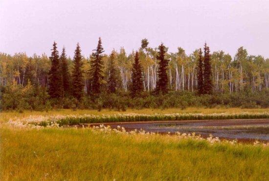 late, summer, vegetation, small, lake