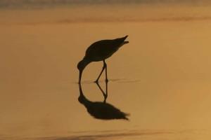 bird, sunrise