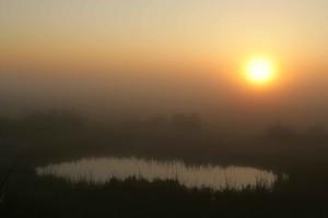 fogy, sunrise