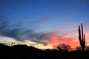 image, sunrise, desert, cactus, silhouette