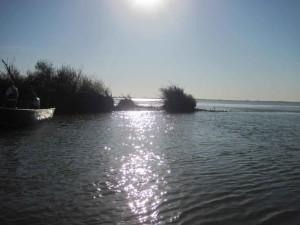 liberté, île, Sacramento, Joaquin, delta, coucher de soleil