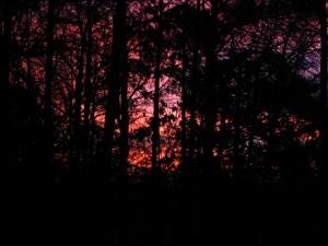morning, sunrise, woods