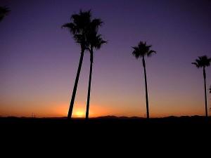 ปาล์มต้นไม้ พระอาทิตย์ขึ้น