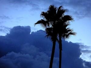 ปาล์ม ต้นไม้ พระอาทิตย์ขึ้น