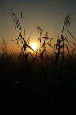 rising, Sun, national park, scenic