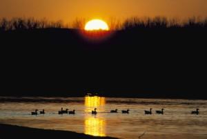 neige, oies, oiseaux, lac, lever de soleil